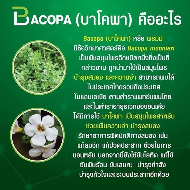 บาโคพาคืออะไร