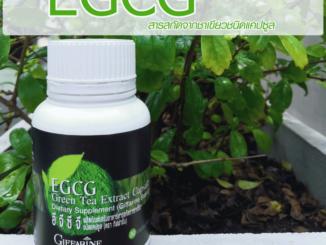 EGCG กิฟฟารีน